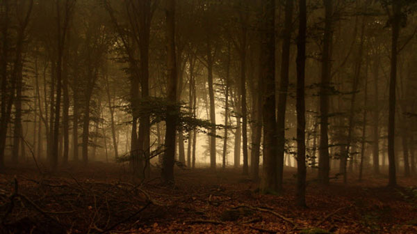 не видя леса за деревьями много не заработаешь